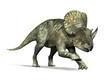 Brachyceratops Dinosaur
