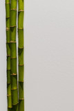 branches of a bamboo board on a white background,
