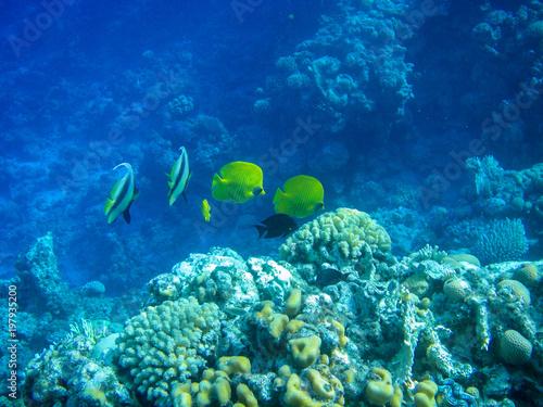 Foto op Plexiglas Donkerblauw Underwater coral reef
