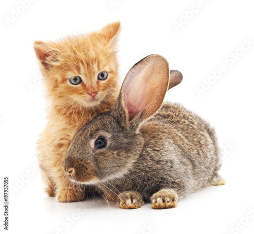 Red kitty and bunny. - 197937855