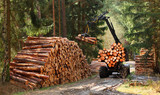 Lumberjack with modern harvester working in a forest. Wood as a source renewable energy.  - 197942208