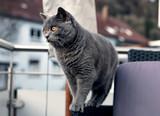starke Katze