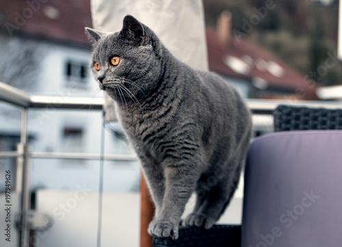 silny kot