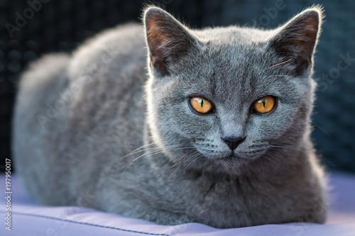 Katze liegt - 197950017
