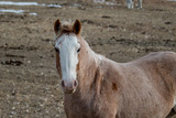 Horse in its winter coat looking a the camera