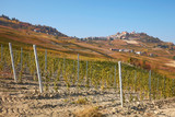 La Morra town and young vineyard in autumn and hills with brown leaves in a sunny day