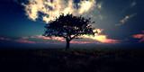 sunrise tree on field