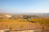 Langhe hills view, vineyards in autumn with yellow leaves in a sunny day in Piedmont, Italy