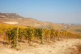 Vineyard in autumn with yellow leaves, path, hills and blue sky in a sunny day