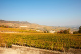 Vineyard and hills in autumn with yellow leaves in a sunny day in Piedmont, Italy
