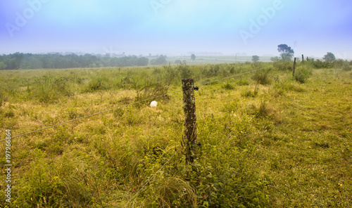 Tuinposter Honing vaca