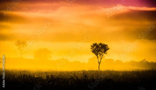 Fotobehang Meloen amanecer, niebla