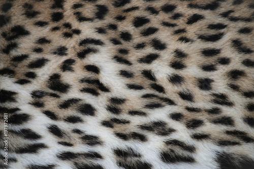 Foto op Plexiglas Panter Leopard Print