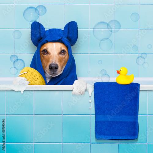 In de dag Crazy dog dog in shower