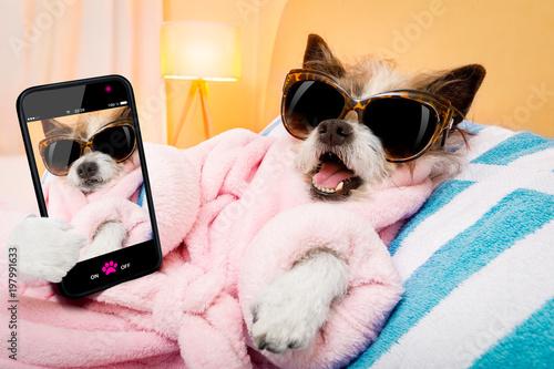 In de dag Crazy dog dog spa wellness salon selfie