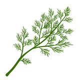 Fresh dill. Green vegetables. Cartoon green dill close-up. Vector illustration. - 197992022