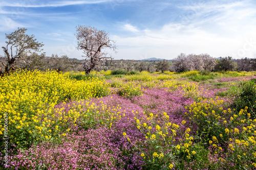 Fotobehang Blauwe hemel Green hills, flowering trees and flowers, beautiful spring landscape