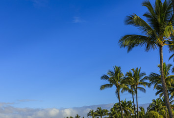 Palms in background in Maui, Hawaii, USA
