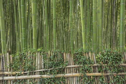 Fotobehang Kyoto Bamboo forest in Arashiyama, Kyoto, Japan