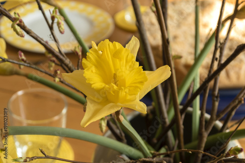 Macroshot from a Jonquil [Narcissus pseudonarcissus] on a wooden table with cake and dishes in the blurred background