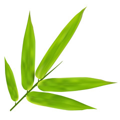 Illustration of Bamboo Leaves on white background  © sewinck