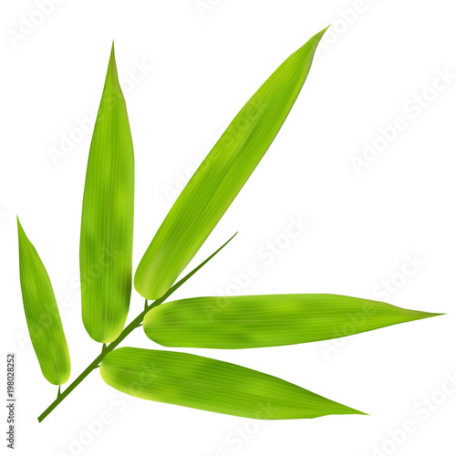Illustration of Bamboo Leaves on white background