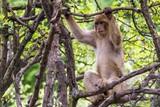 Affe in natürlicher Umgebung