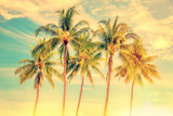 Group of palm trees, vintage style, summer and travel concept - 198032224