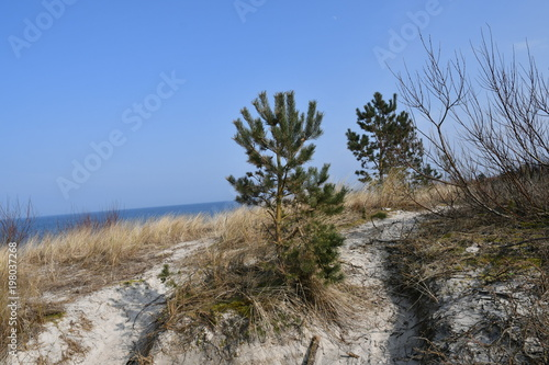 Foto op Aluminium Cappuccino Spring impressions from Chalupy, a Kashubian seaside resort on the Hel peninsula, here you can see photos of the beautiful beach, Pomerania, Poland, Europe