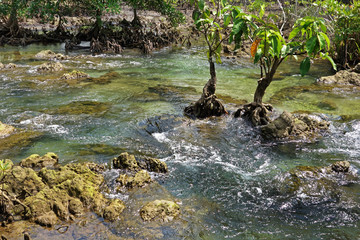 Clear tropical stream at Tha Pom, the mangrove forest in Krabi Province, Thailand