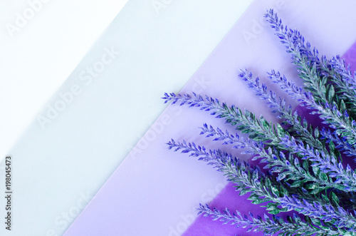 Bouquet of lavender lays on striped white grey violet background