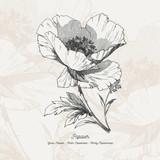 Full vector flower illustration