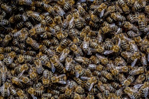 Plexiglas Bee bee, swarm, honey