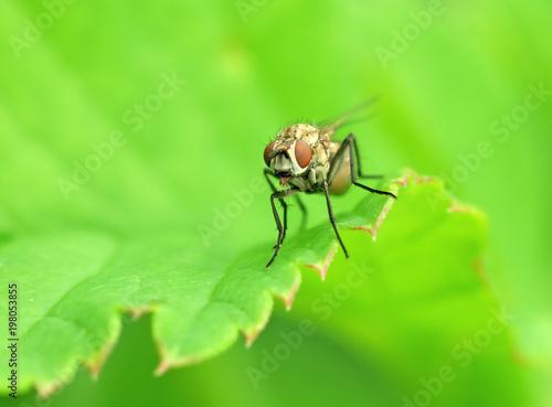 fly - 198053855