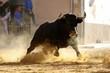 bull in spanish