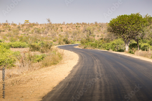 Winding road in the Kruger National Park