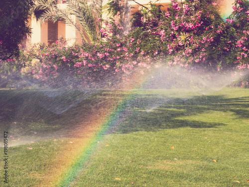 Poster Aubergine watering sprinkler lawn