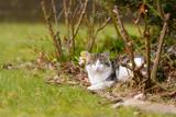 Eine Katze liegt entspannt im Garten unter Bäumen