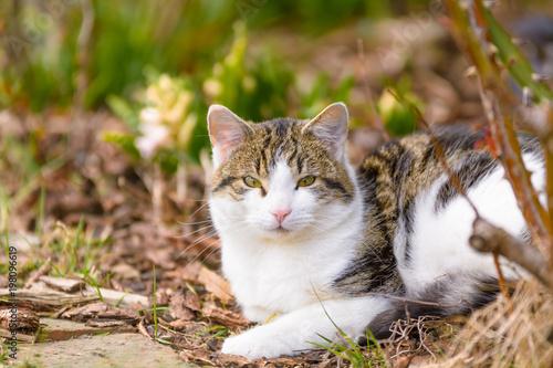 Fotobehang Kat Eine Katze liegt entspannt im Garten unter Bäumen