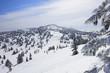 雪原と樹氷群