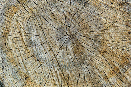 In de dag Brandhout textuur Wood texture with growth rings.