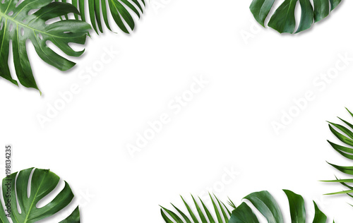 Monstera deliciosa i żółci palmowi tropikalni liście odizolowywający na białym tle