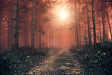 Fantasy red colored foggy forest with mystic sunlight. Color filter effect used.  - 198148622