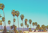 Tall palm trees with Hollywood sign on the background