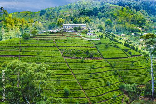 Fotobehang Asia land green tea plantation in Sri Lanka