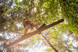 Teenager having fun on high ropes course, adventure, park, climbing trees in a forest in summer - 198178847