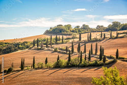 Fotobehang Toscane Beautiful typical landscape of Tuscany with rows of cypresses, La Foce, Tuscany, Italy