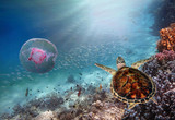 Giant Jellyfish and Turtle - 198190881