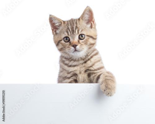 Kotek kotek wisi nad pustym plakatem, dodajesz wiadomość.