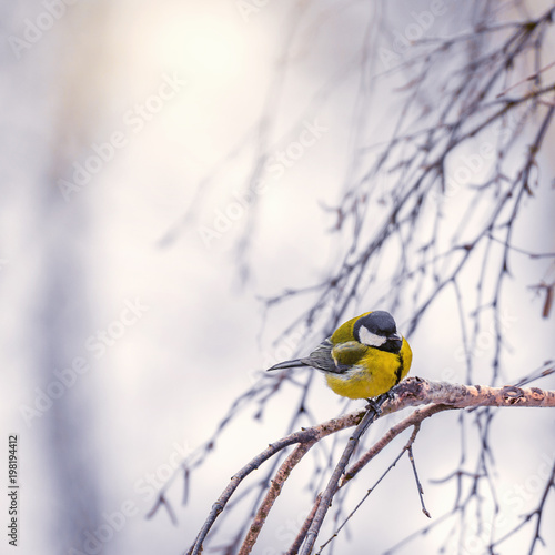 Tit on the tree branch. - 198194412